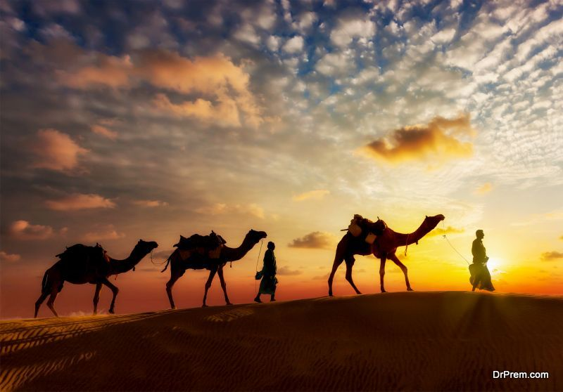 camel-ride-tours